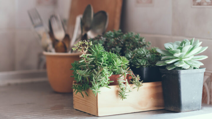 kitchen plants inspiring boy baby names